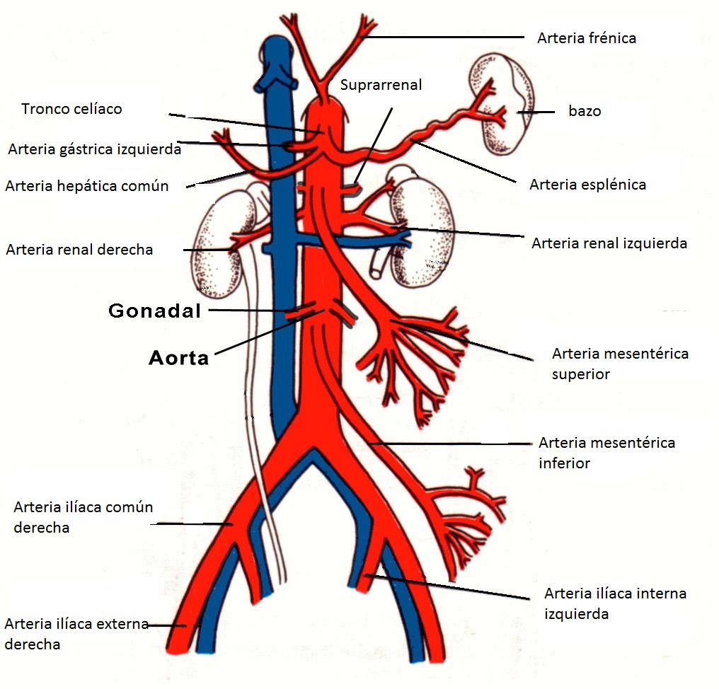 Isquemia intestinal. Hallazgos en TCMD. | RadiodiagnosticAndo