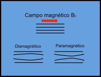 En los materiales Diamantéticos, el campo magnético se dispersa. En los para, super y ferromagnéticos, el campo se concentra.